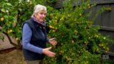 Gardening Australia s31e34